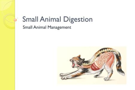 Small Animal Digestion Small Animal Management. Today we will Define digestion List and describe the parts and functions of digestive organs Demonstrate.