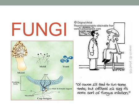 FUNGI. Cell Structure  Eukaryotic  Yeast are unicellular; but mold, rust, mushrooms and truffles are multicellular.