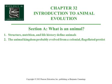 CHAPTER 32 INTRODUCTION TO ANIMAL EVOLUTION Copyright © 2002 Pearson Education, Inc., publishing as Benjamin Cummings Section A: What is an animal? 1.Structure,