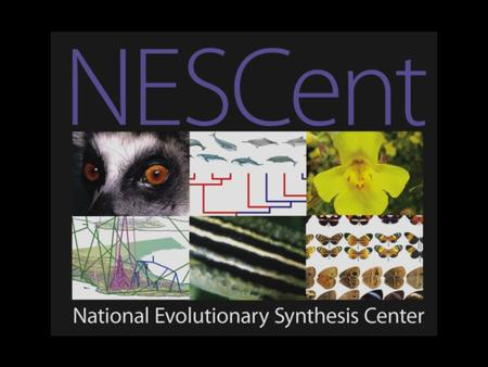The Modern Synthesis Population genetics Systematics Paleontology Botany and Zoology.