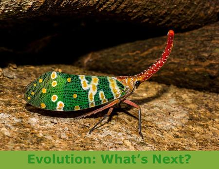 Evolution: What's Next?. Explore Overview The goal of this part of the project is to explore and learn in order to be prepared to meet the project challenge!