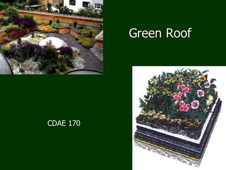 Green Roof CDAE 170. What's been done? Green roofs in Iceland, 1800's Green roofs in Iceland, 1800's Technology in Germany 1970's Technology in Germany.