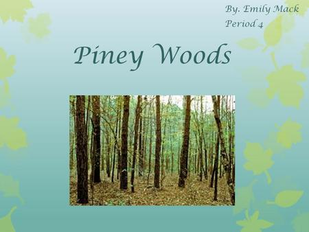 Piney Woods By. Emily Mack Period 4. Location The piney woods is located in the east of Texas.