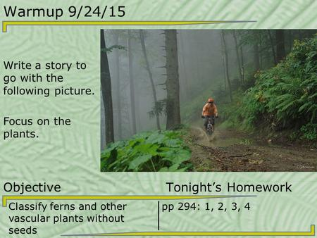 Warmup 9/24/15 Write a story to go with the following picture. Focus on the plants. Objective Tonight's Homework Classify ferns and other vascular plants.
