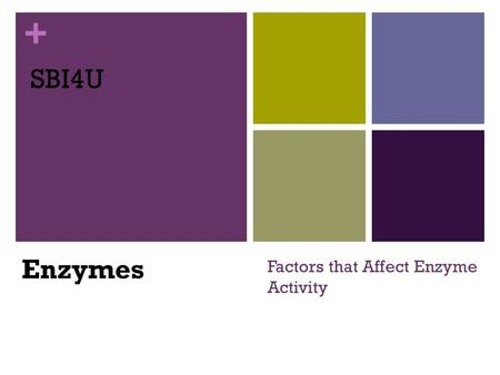 + Factors that Affect Enzyme Activity SBI4U Enzymes.
