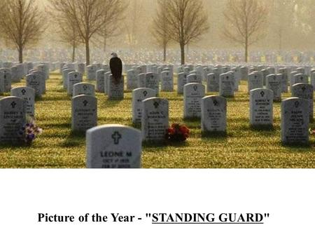 Picture of the Year - Standing Guard Picture of the Year - STANDING GUARD