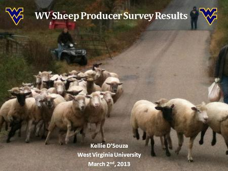 WV Sheep Producer Survey Results Kellie D'Souza West Virginia University March 2 nd, 2013.