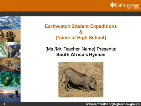 Www.earthwatch.org/high-school-groups 1 Earthwatch Student Expeditions & [Name of High School] [Ms./Mr. Teacher Name] Presents: South Africa's Hyenas.