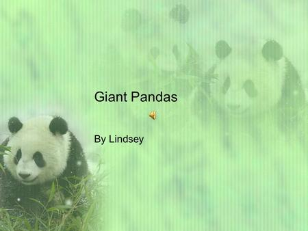 Giant Pandas By Lindsey Hey reader's do you want to learn giant Panda facts? Let's go! Giant Pandas generally live in China. The panda's habitat is a.