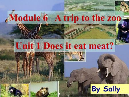 Module 6 A trip to the zoo By Sally Unit 1 Does it eat meat?