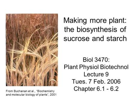 Making more plant: the biosynthesis of sucrose and starch Biol 3470: Plant Physiol Biotechnol Lecture 9 Tues. 7 Feb. 2006 Chapter 6.1 - 6.2 From Buchanan.