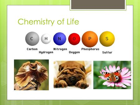 Chemistry of Life. CHNOPS Molecules  When you put atoms together such as hydrogen and oxygen, you get molecules: Water.  The same is true for CHNOPS.