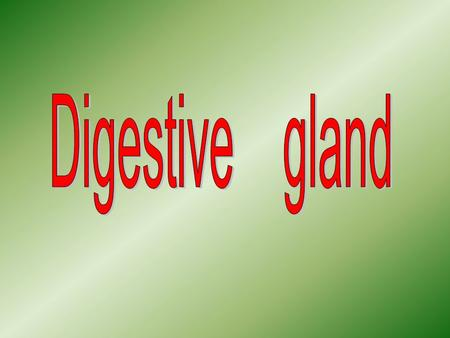 The extrinsic glands of the digestive system include the major salivary glands, the pancreas, and the liver, all of which are located outside the wall.