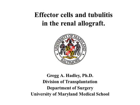 Gregg A. Hadley, Ph.D. Division of Transplantation Department of Surgery University of Maryland Medical School Effector cells and tubulitis in the renal.