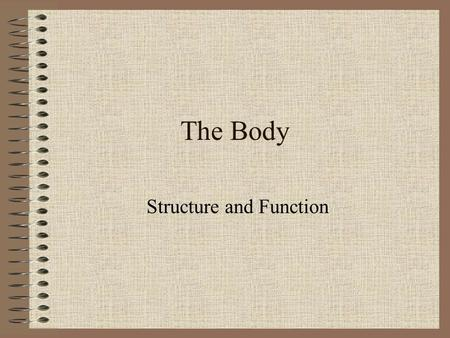 The Body Structure and Function The Skeleton  The skeleton is the framework of bones which gives shape and support to the body. It also protects the.