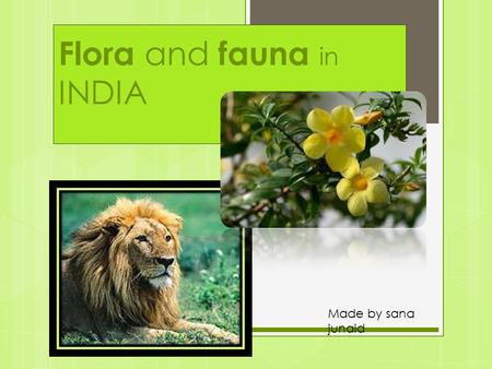 Flora and fauna in INDIA Made by sana junaid. FlORA.