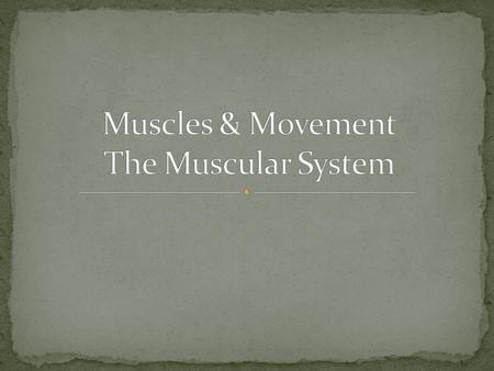 What is the major function of the muscles? Movement – walking, running, etc. Digest Food Pumps blood throughout your body Provide stability Movement of.