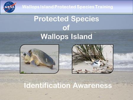Wallops Island Protected Species Training Protected Species of Wallops Island Identification Awareness.