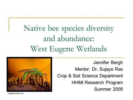 Native bee species diversity and abundance: West Eugene Wetlands Jennifer Bergh Mentor: Dr. Sujaya Rao Crop & Soil Science Department HHMI Research Program.