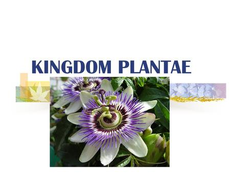 KINGDOM PLANTAE What is a Plant? Multicellular and Eukaryotic.