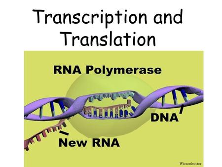 Transcription and Translation. What is Transcription? It is a process that produces a complementary strand of RNA by copying a complementary strand of.