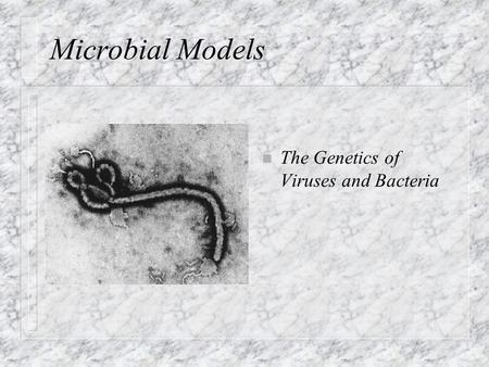 Microbial Models n The Genetics of Viruses and Bacteria.