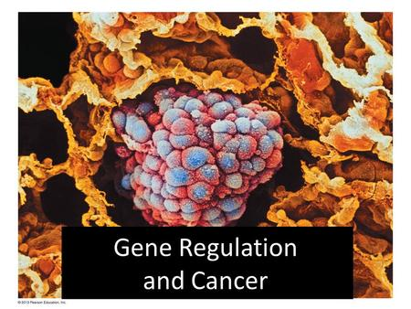 "Gene Regulation and Cancer. Gene Regulation At any given time, most of the thousands of genes in a cell are not needed. How do cells ""turn on"" (express)"
