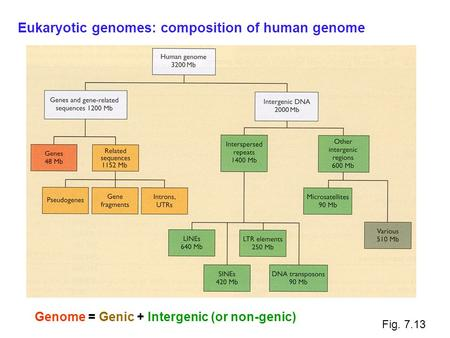Fig. 7.13 Genome = Genic + Intergenic (or non-genic) Eukaryotic genomes: composition of human genome.