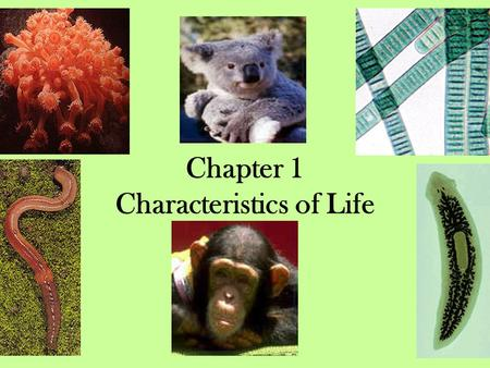 Chapter 1 Characteristics of Life. I. What is Biology? 1. The scientific study of life.