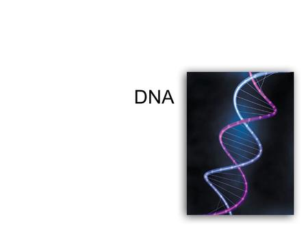 DNA. How was DNA discovered? There were 3 major experiments that led to the discovery of DNA as the genetic material. –Griffiths Transformations –Avery.