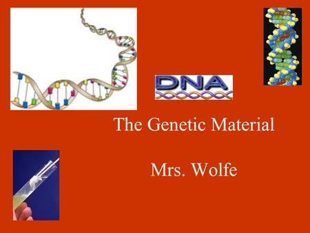 The Genetic Material Mrs. Wolfe. Griffith and Avery (1950's) Experimented to identify DNA as the genetic material. Griffith's experiments: S. pneumoniae.