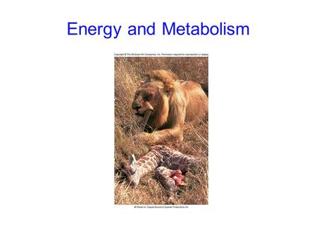 Energy and Metabolism. 2 Flow of Energy Energy: the capacity to do work -kinetic energy: the energy of motion -potential energy: stored energy.