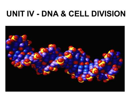 UNIT IV - DNA & CELL DIVISION. I. INTRODUCTION TO DNA ________________ – All of an organism's DNA; must be copied prior to cell division __________________.