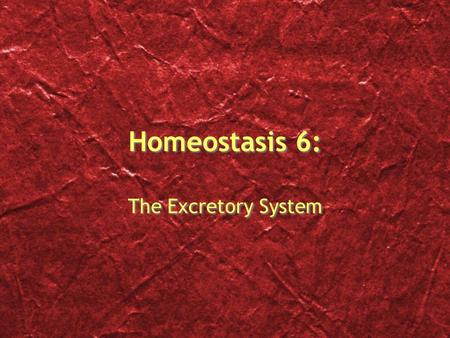 Homeostasis 6: The Excretory System The Excretory System Overview Excretion is the process of separating wastes from body fluids, then eliminating the.