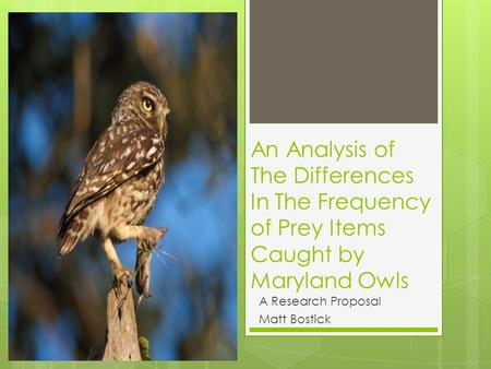 An Analysis of The Differences In The Frequency of Prey Items Caught by Maryland Owls A Research Proposal Matt Bostick.