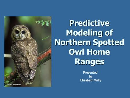 Predictive Modeling of Northern Spotted Owl Home Ranges Presented by Elizabeth Willy USFWS File Photo.