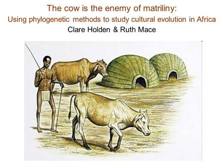 The cow is the enemy of matriliny: Using phylogenetic methods to study cultural evolution in Africa Clare Holden & Ruth Mace.