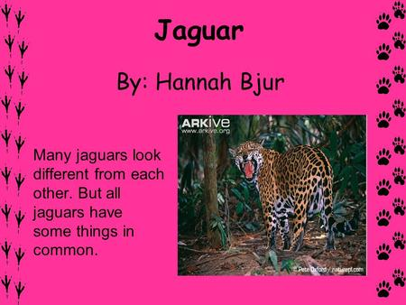 Jaguar By: Hannah Bjur Many jaguars look different from each other. But all jaguars have some things in common.