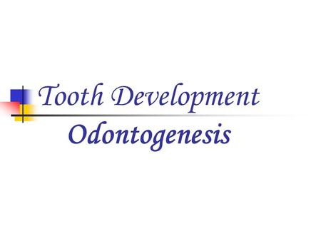 Tooth Development Odontogenesis