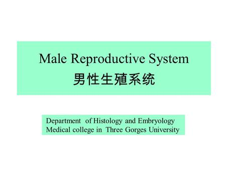 Male Reproductive System 男性生殖系统 Department of Histology and Embryology Medical college in Three Gorges University.