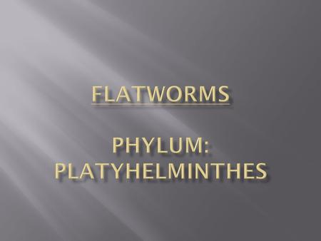 Flatworms Phylum: PLATYHELMINTHES