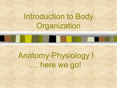 Introduction to Body Organization Anatomy-Physiology I … here we go!