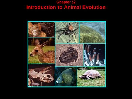 Chapter 32 Introduction to Animal Evolution. What is an animal?