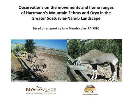Observations on the movements and home ranges of Hartmann's Mountain Zebras and Oryx in the Greater Sossusvlei-Namib Landscape Based on a report by John.