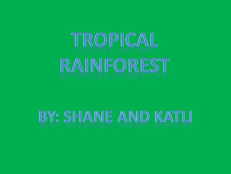 Only rain forest located in the tropics or ten degrees within the equator have year round warm weather. Subtropical rain forest that lay outside the.