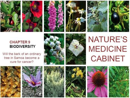 CHAPTER 9 BIODIVERSITY NATURE'S MEDICINE CABINET Will the bark of an ordinary tree in Samoa become a cure for cancer?
