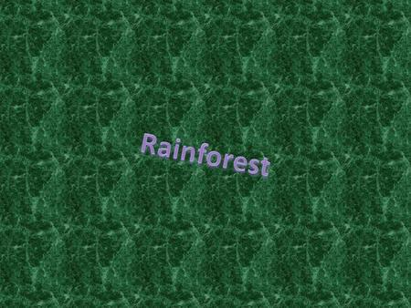 Rainforests are around the equator. The rainforest we chose is in South America, it is a tropical biome. Rainforests are always hot and rainy. There.