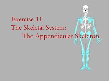 Exercise 11 The Skeletal System: The Appendicular Skeleton