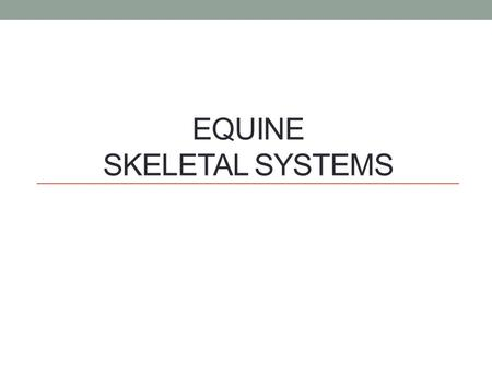 EQUINE SKELETAL SYSTEMS. Functions of the Skeletal System Form Protection Support Strength.