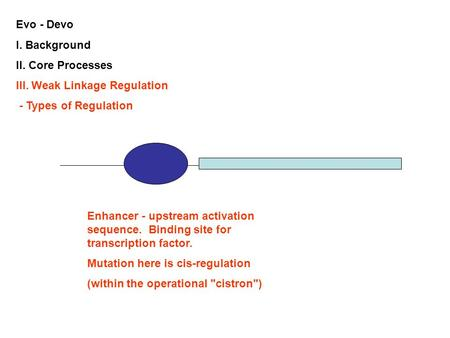 Evo - Devo I. Background II. Core Processes III. Weak Linkage Regulation - Types of Regulation Enhancer - upstream activation sequence. Binding site for.